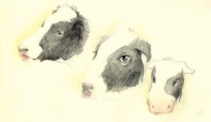 COWS (pastels, 30x20)